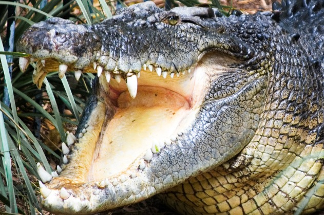 The Crocs